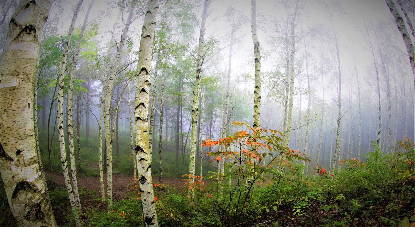 자작나무144A0949.jpg